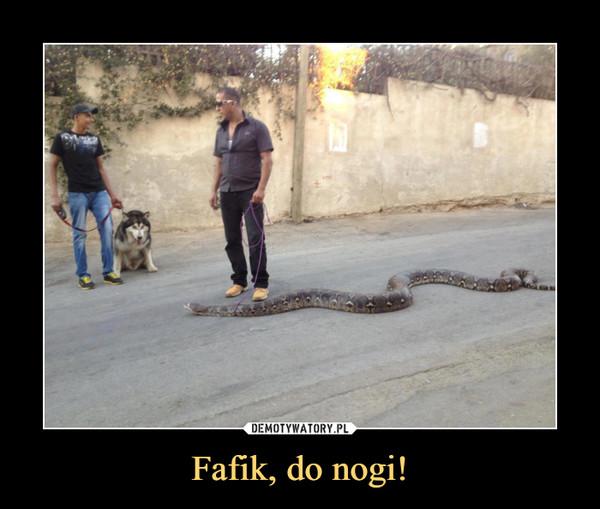 Fafik, do nogi! –