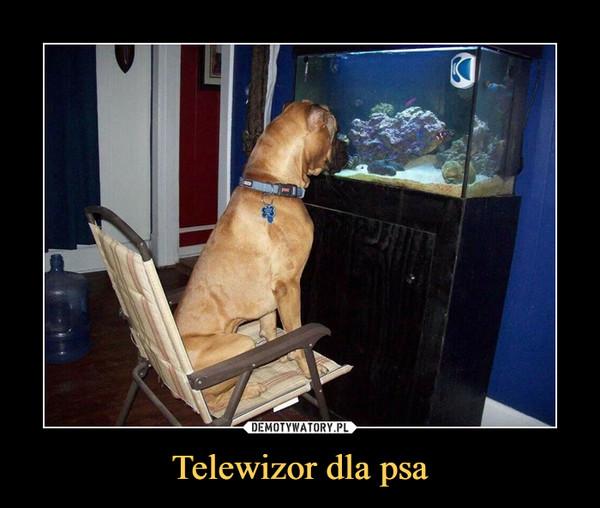Telewizor dla psa –