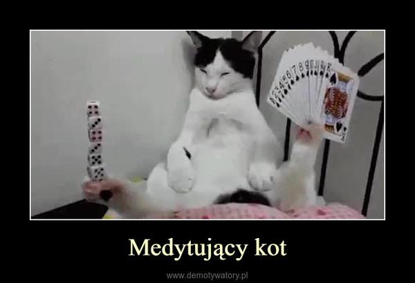 Medytujący kot –