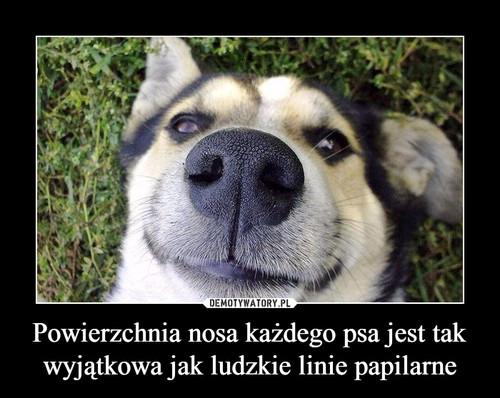Powierzchnia nosa każdego psa jest tak wyjątkowa jak ludzkie linie papilarne