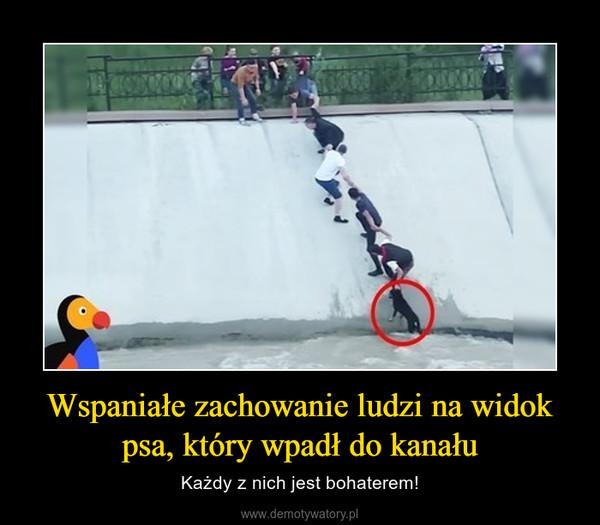 Wspaniałe zachowanie ludzi na widok psa, który wpadł do kanału – Każdy z nich jest bohaterem!