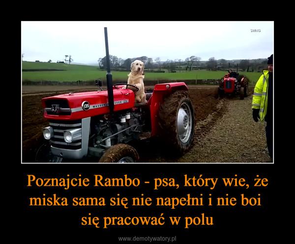 Poznajcie Rambo - psa, który wie, że miska sama się nie napełni i nie boi się pracować w polu –