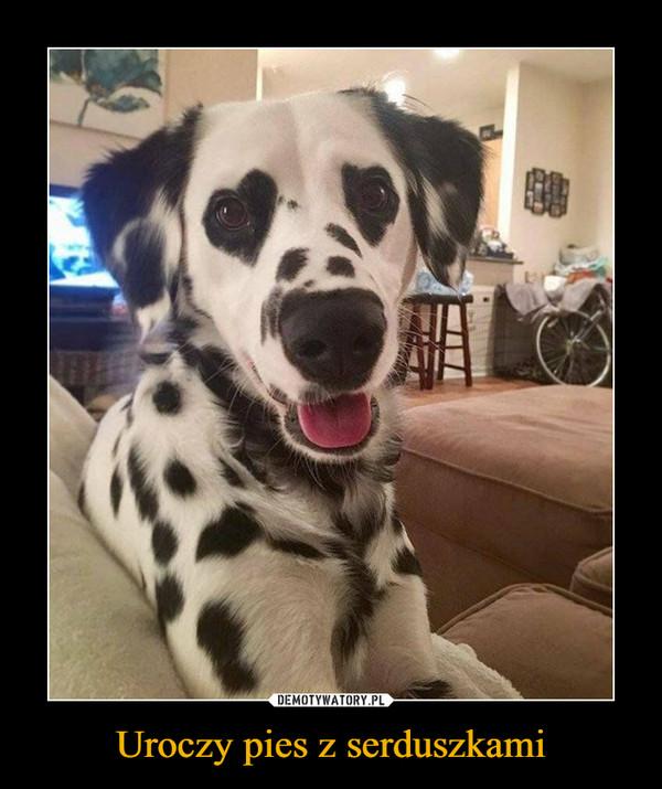 Uroczy pies z serduszkami –