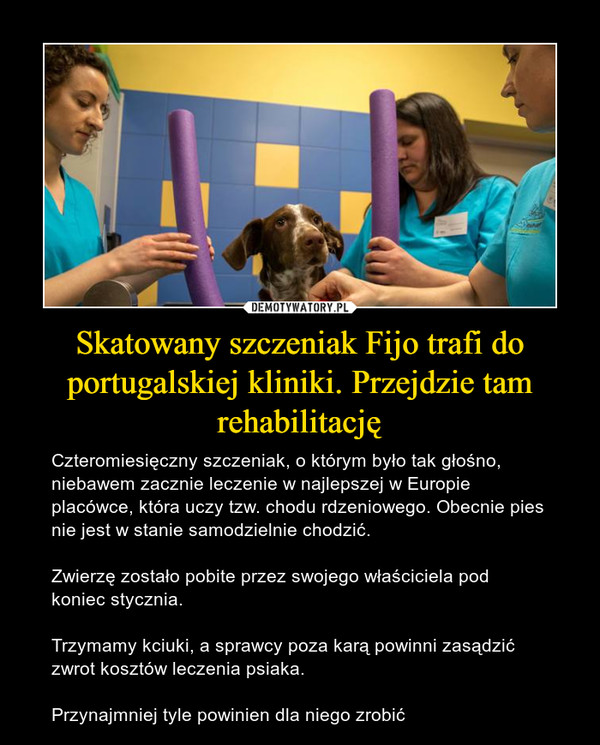 Skatowany szczeniak Fijo trafi do portugalskiej kliniki. Przejdzie tam rehabilitację – Czteromiesięczny szczeniak, o którym było tak głośno, niebawem zacznie leczenie w najlepszej w Europie placówce, która uczy tzw. chodu rdzeniowego. Obecnie pies nie jest w stanie samodzielnie chodzić.Zwierzę zostało pobite przez swojego właściciela pod koniec stycznia.Trzymamy kciuki, a sprawcy poza karą powinni zasądzić zwrot kosztów leczenia psiaka. Przynajmniej tyle powinien dla niego zrobić