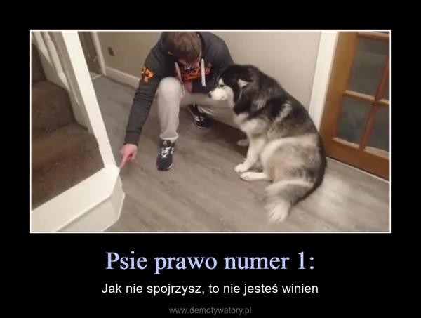 Psie prawo numer 1: – Jak nie spojrzysz, to nie jesteś winien