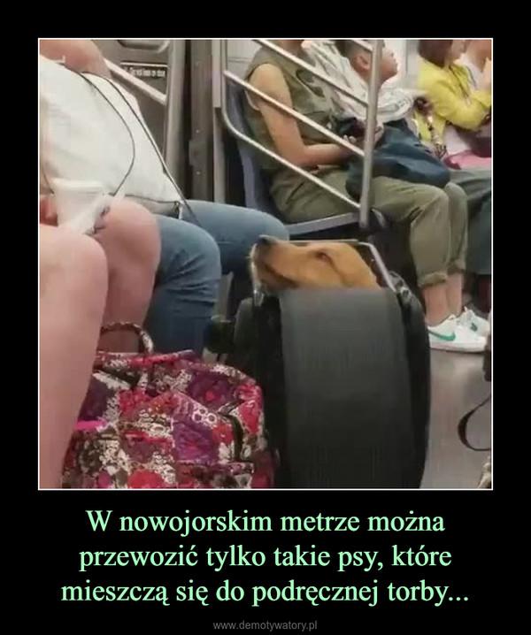 W nowojorskim metrze można przewozić tylko takie psy, które mieszczą się do podręcznej torby... –