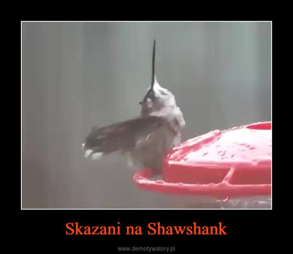 Skazani na Shawshank –