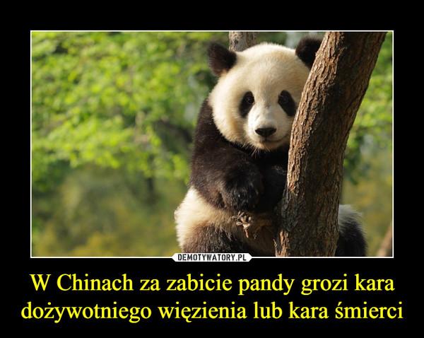 W Chinach za zabicie pandy grozi kara dożywotniego więzienia lub kara śmierci –