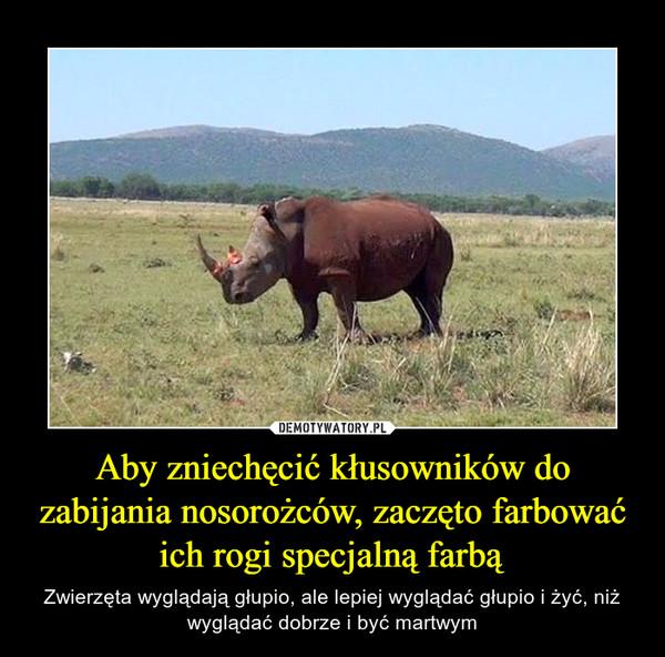 Aby zniechęcić kłusowników do zabijania nosorożców, zaczęto farbować ich rogi specjalną farbą – Zwierzęta wyglądają głupio, ale lepiej wyglądać głupio i żyć, niż wyglądać dobrze i być martwym