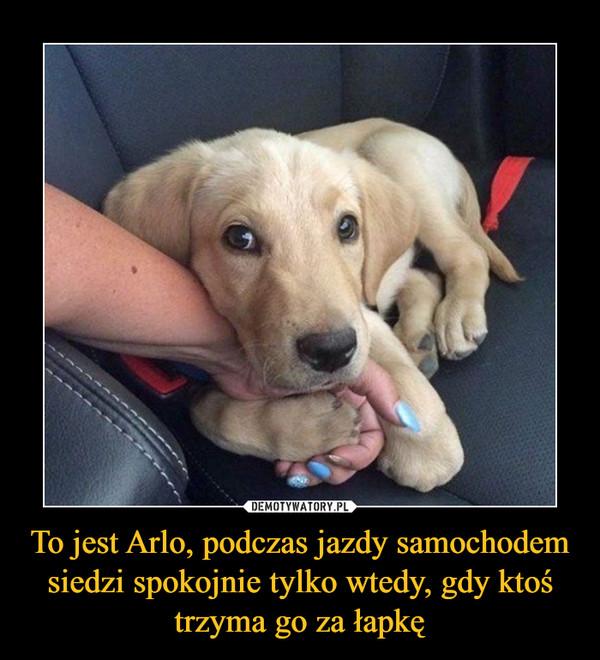 To jest Arlo, podczas jazdy samochodem siedzi spokojnie tylko wtedy, gdy ktoś trzyma go za łapkę –