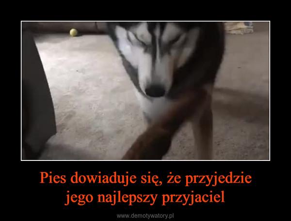Pies dowiaduje się, że przyjedziejego najlepszy przyjaciel –