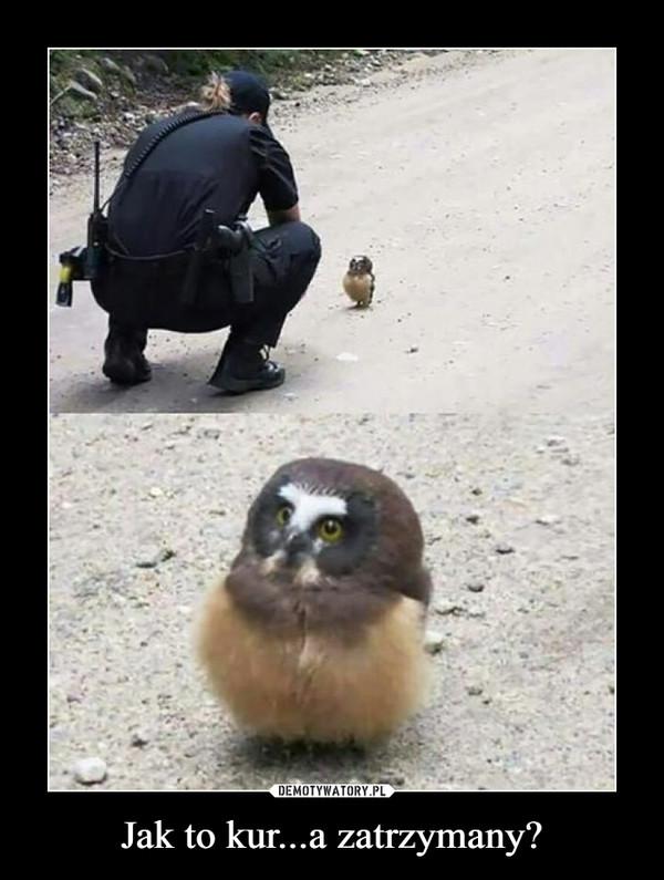 Jak to kur...a zatrzymany? –