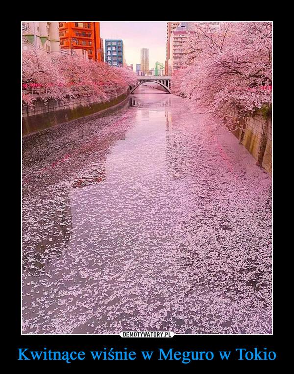 Kwitnące wiśnie w Meguro w Tokio –