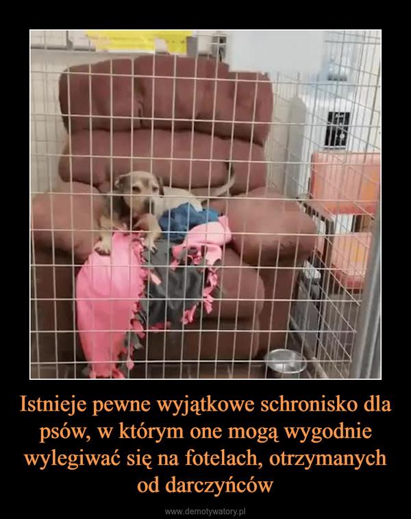 Istnieje pewne wyjątkowe schronisko dla psów, w którym one mogą wygodnie wylegiwać się na fotelach, otrzymanych od darczyńców –