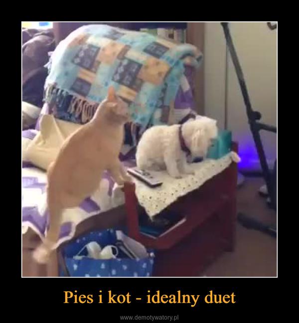 Pies i kot - idealny duet –