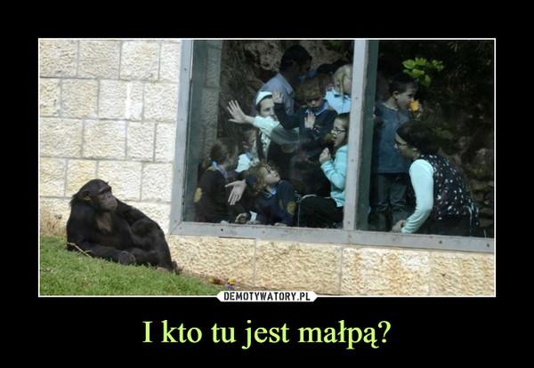 I kto tu jest małpą? –