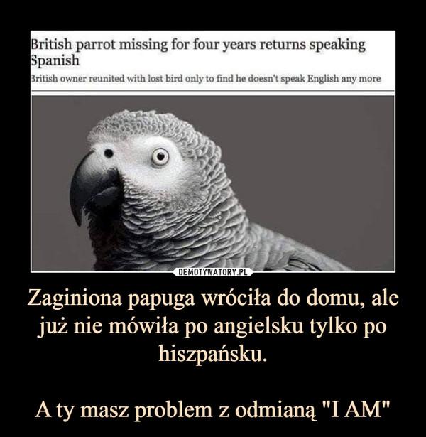 """Zaginiona papuga wróciła do domu, ale już nie mówiła po angielsku tylko po hiszpańsku.A ty masz problem z odmianą """"I AM"""" –"""