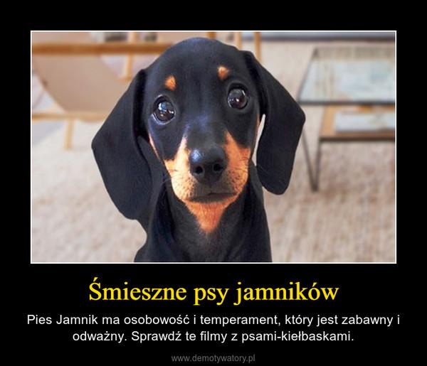 Śmieszne psy jamników – Pies Jamnik ma osobowość i temperament, który jest zabawny i odważny. Sprawdź te filmy z psami-kiełbaskami.