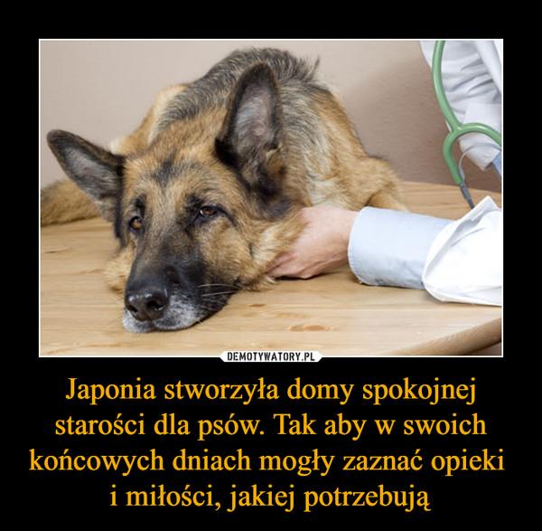 Japonia stworzyła domy spokojnej starości dla psów. Tak aby w swoich końcowych dniach mogły zaznać opieki i miłości, jakiej potrzebują –