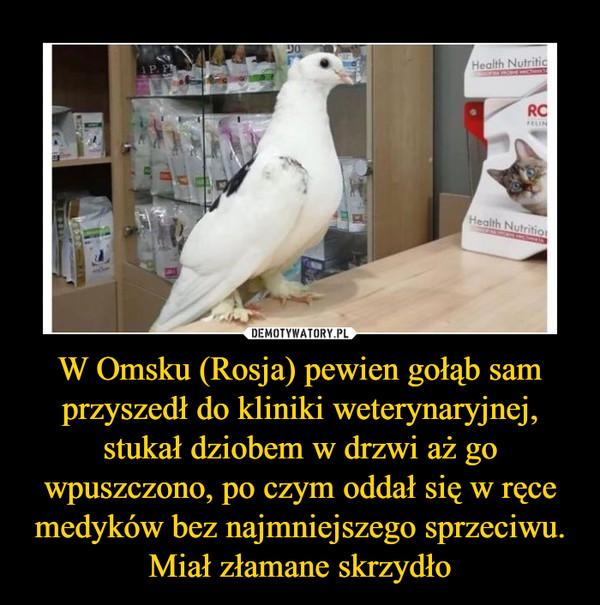 W Omsku (Rosja) pewien gołąb sam przyszedł do kliniki weterynaryjnej, stukał dziobem w drzwi aż go wpuszczono, po czym oddał się w ręce medyków bez najmniejszego sprzeciwu. Miał złamane skrzydło –