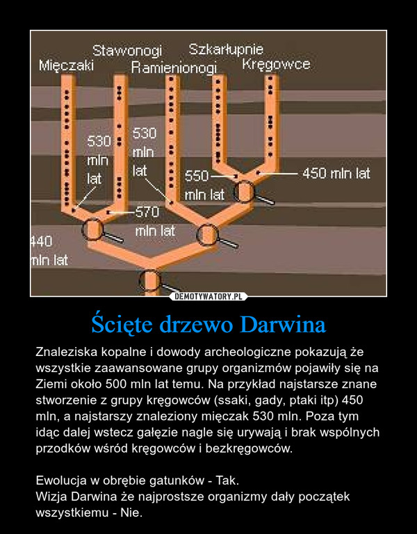 Ścięte drzewo Darwina – Znaleziska kopalne i dowody archeologiczne pokazują że wszystkie zaawansowane grupy organizmów pojawiły się na Ziemi około 500 mln lat temu. Na przykład najstarsze znane stworzenie z grupy kręgowców (ssaki, gady, ptaki itp) 450 mln, a najstarszy znaleziony mięczak 530 mln. Poza tym idąc dalej wstecz gałęzie nagle się urywają i brak wspólnych przodków wśród kręgowców i bezkręgowców.Ewolucja w obrębie gatunków - Tak.Wizja Darwina że najprostsze organizmy dały początek wszystkiemu - Nie.