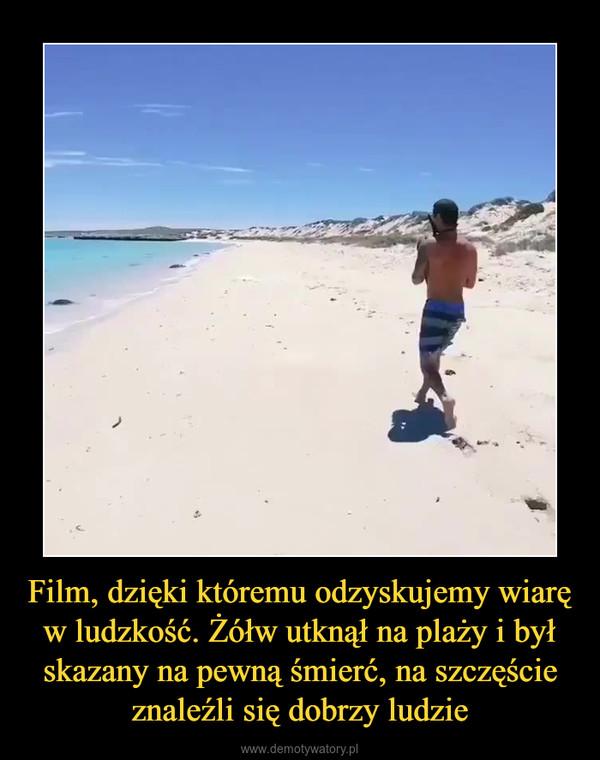 Film, dzięki któremu odzyskujemy wiarę w ludzkość. Żółw utknął na plaży i był skazany na pewną śmierć, na szczęście znaleźli się dobrzy ludzie –