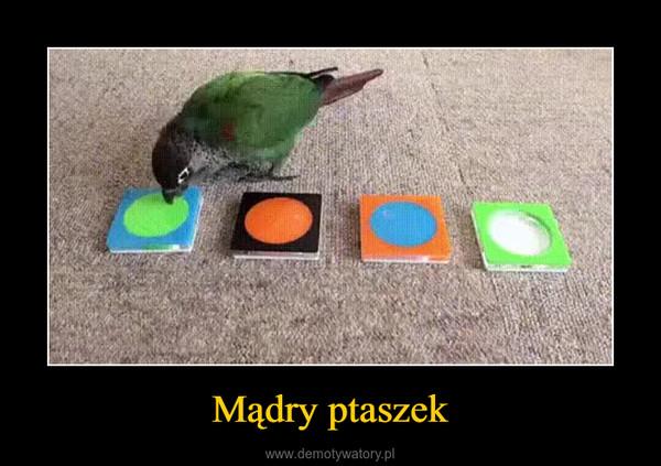Mądry ptaszek –