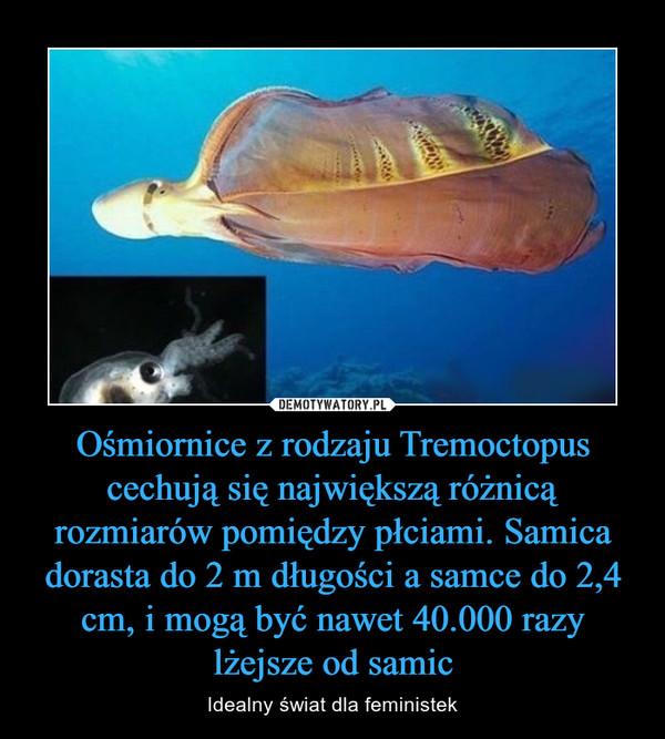 Ośmiornice z rodzaju Tremoctopus cechują się największą różnicą rozmiarów pomiędzy płciami. Samica dorasta do 2 m długości a samce do 2,4 cm, i mogą być nawet 40.000 razy lżejsze od samic – Idealny świat dla feministek