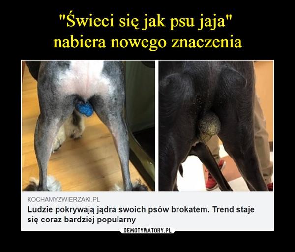 –  kochamyzwierzaki.plLudzie pokrywają jądra swoich psów brokatem. Trend staje się coraz bardziej popularny