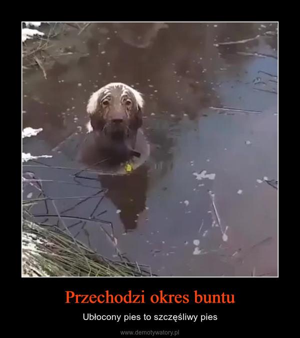 Przechodzi okres buntu – Ubłocony pies to szczęśliwy pies