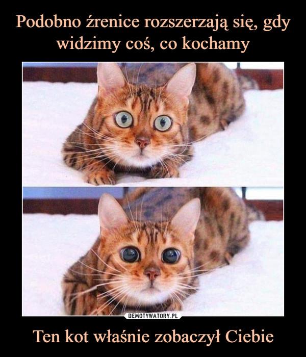 Ten kot właśnie zobaczył Ciebie –
