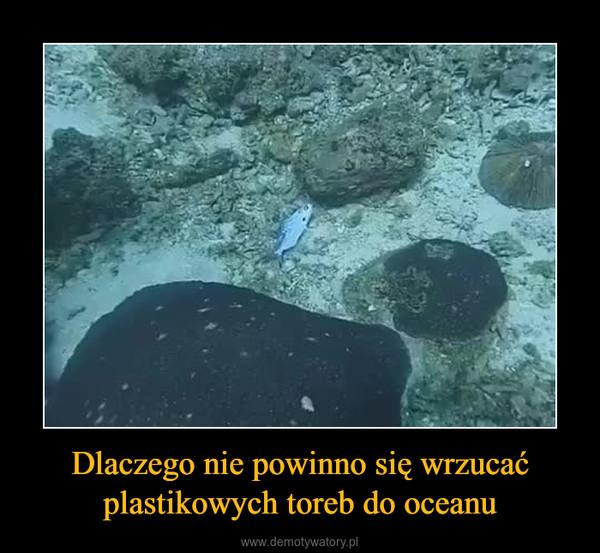 Dlaczego nie powinno się wrzucać plastikowych toreb do oceanu –
