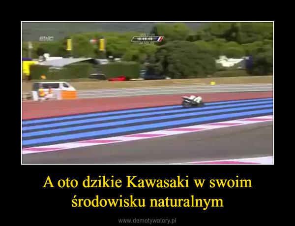 A oto dzikie Kawasaki w swoim środowisku naturalnym –