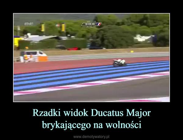 Rzadki widok Ducatus Major brykającego na wolności –
