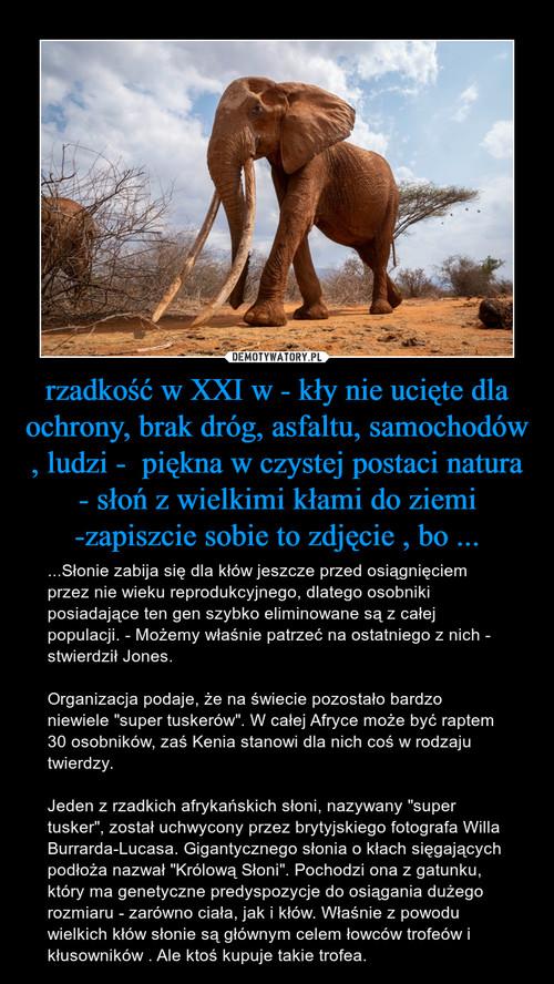 rzadkość w XXI w - kły nie ucięte dla ochrony, brak dróg, asfaltu, samochodów , ludzi -  piękna w czystej postaci natura - słoń z wielkimi kłami do ziemi -zapiszcie sobie to zdjęcie , bo ...