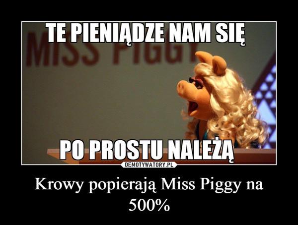 Krowy popierają Miss Piggy na 500% –