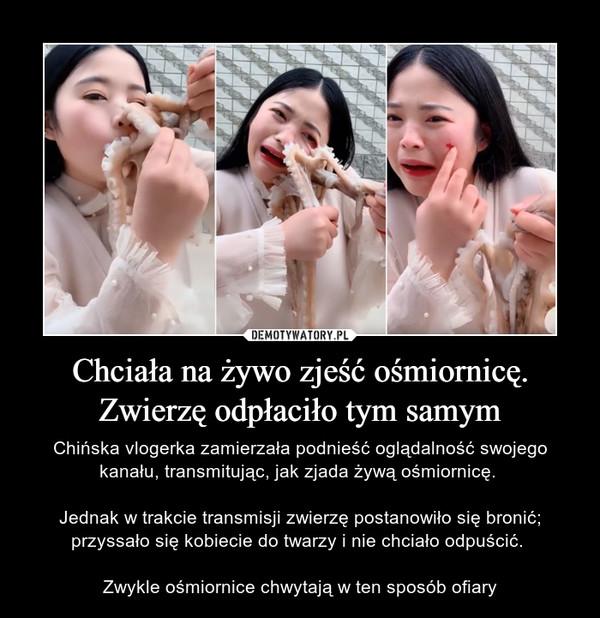 Chciała na żywo zjeść ośmiornicę. Zwierzę odpłaciło tym samym – Chińska vlogerka zamierzała podnieść oglądalność swojego kanału, transmitując, jak zjada żywą ośmiornicę. Jednak w trakcie transmisji zwierzę postanowiło się bronić; przyssało się kobiecie do twarzy i nie chciało odpuścić. Zwykle ośmiornice chwytają w ten sposób ofiary