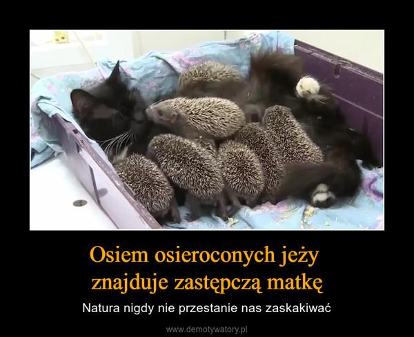 Osiem osieroconych jeży znajduje zastępczą matkę – Natura nigdy nie przestanie nas zaskakiwać