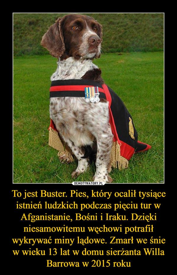 To jest Buster. Pies, który ocalił tysiące istnień ludzkich podczas pięciu tur w Afganistanie, Bośni i Iraku. Dzięki niesamowitemu węchowi potrafił wykrywać miny lądowe. Zmarł we śnie w wieku 13 lat w domu sierżanta Willa Barrowa w 2015 roku –