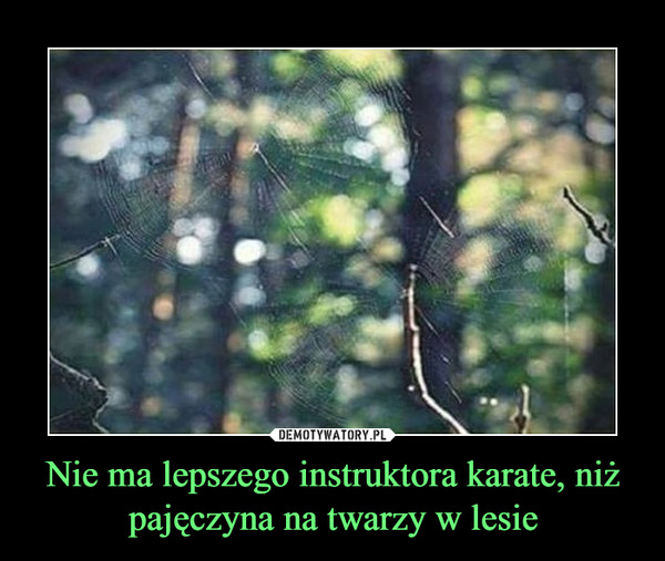 Nie ma lepszego instruktora karate, niż pajęczyna na twarzy w lesie –