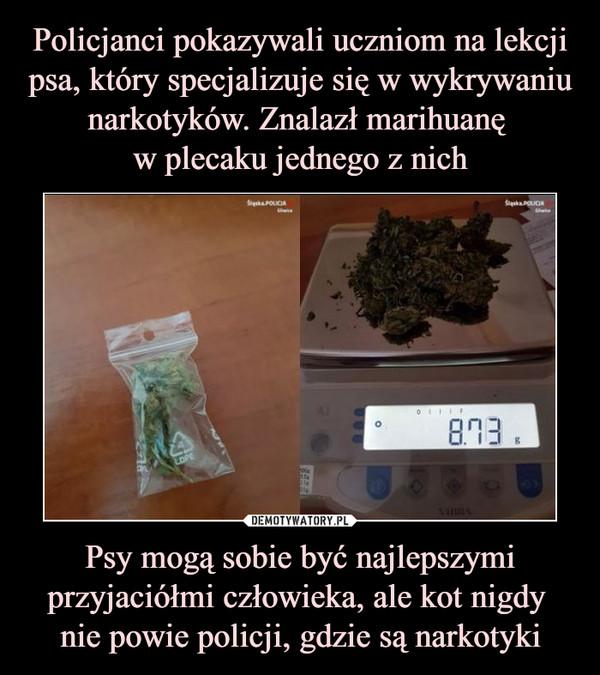 Psy mogą sobie być najlepszymi przyjaciółmi człowieka, ale kot nigdy nie powie policji, gdzie są narkotyki –