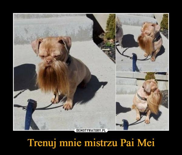 Trenuj mnie mistrzu Pai Mei –