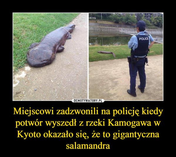 Miejscowi zadzwonili na policję kiedy potwór wyszedł z rzeki Kamogawa w Kyoto okazało się, że to gigantyczna salamandra –