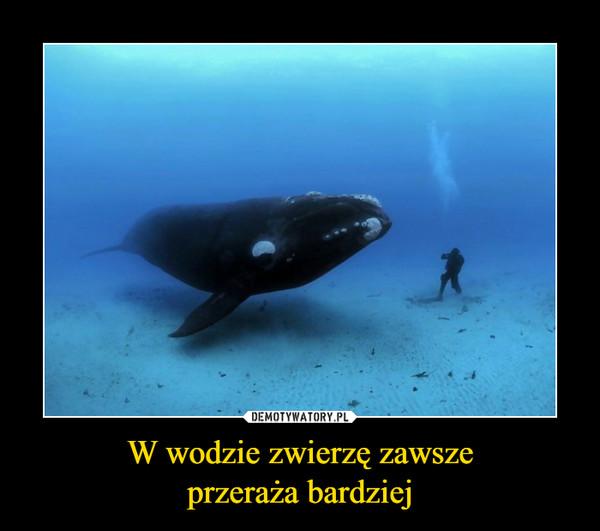 W wodzie zwierzę zawszeprzeraża bardziej –