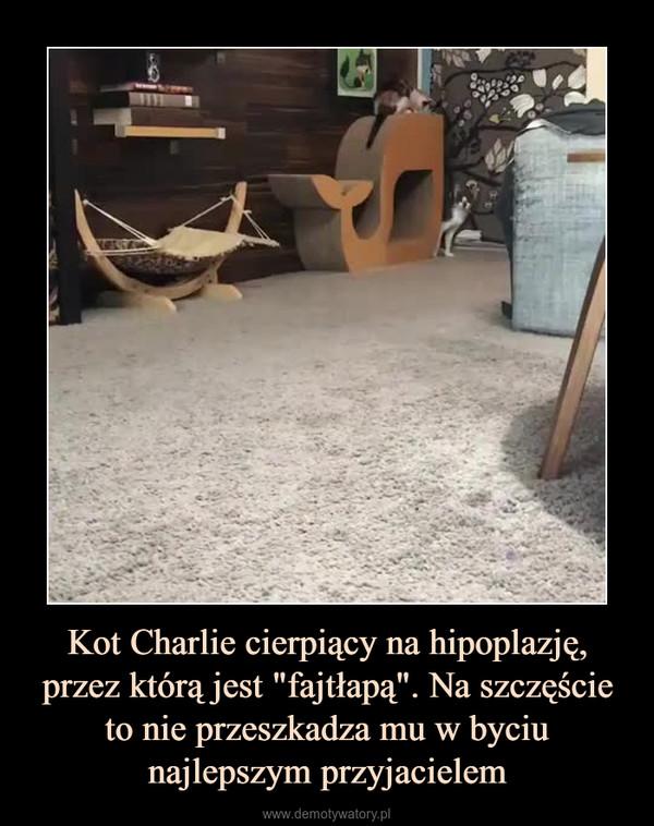 """Kot Charlie cierpiący na hipoplazję, przez którą jest """"fajtłapą"""". Na szczęście to nie przeszkadza mu w byciu najlepszym przyjacielem –"""