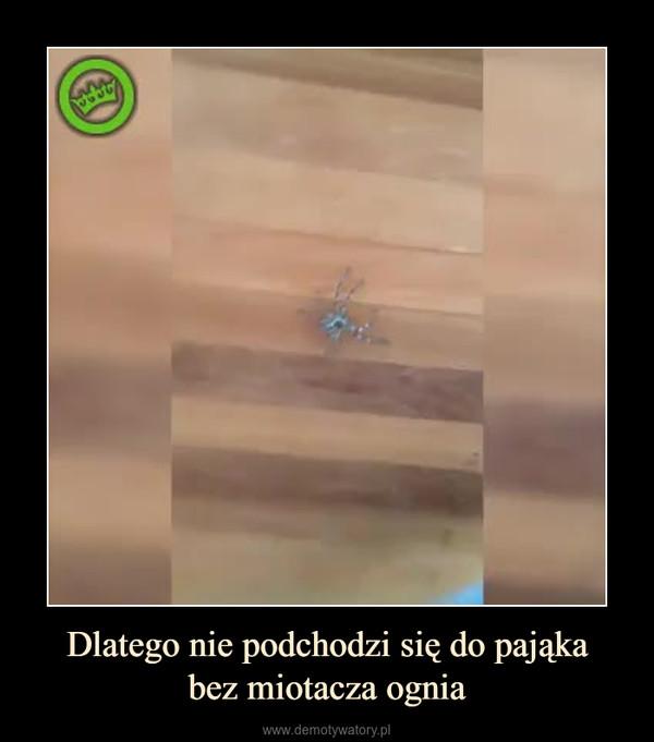 Dlatego nie podchodzi się do pająkabez miotacza ognia –