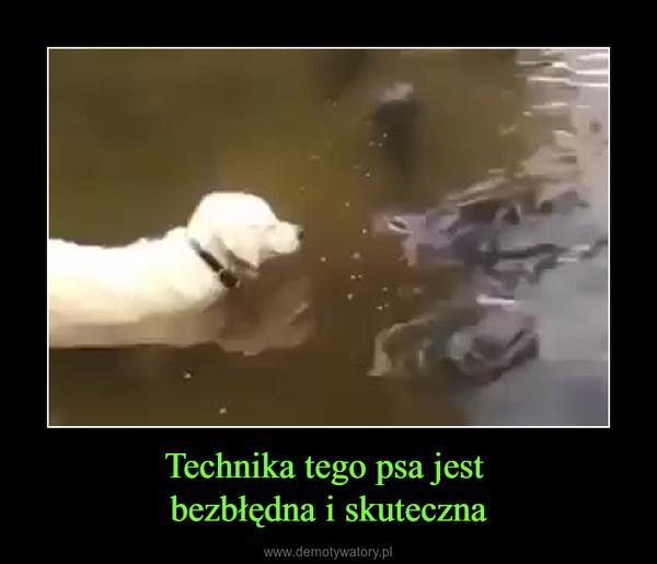 Technika tego psa jest bezbłędna i skuteczna –