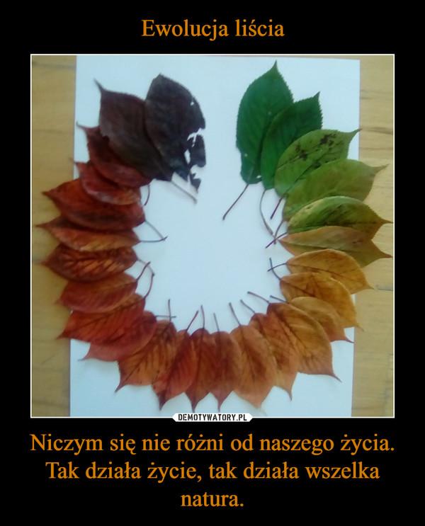 Niczym się nie różni od naszego życia. Tak działa życie, tak działa wszelka natura. –