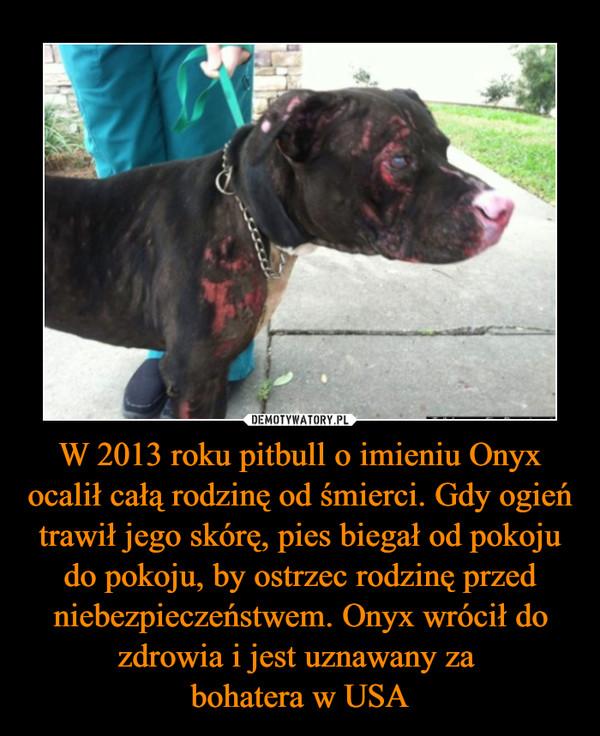 W 2013 roku pitbull o imieniu Onyx ocalił całą rodzinę od śmierci. Gdy ogień trawił jego skórę, pies biegał od pokoju do pokoju, by ostrzec rodzinę przed niebezpieczeństwem. Onyx wrócił do zdrowia i jest uznawany za bohatera w USA –