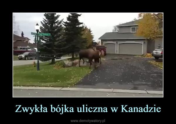 Zwykła bójka uliczna w Kanadzie –